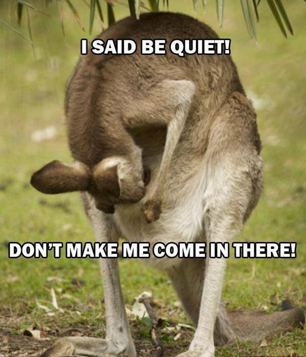 rrbc-kangaroo-funny