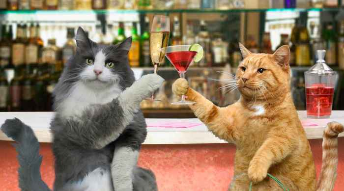 Cats drinking cocktails its a girl thing.