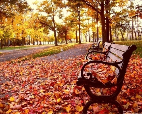 Flash Fiction park bench in the fall