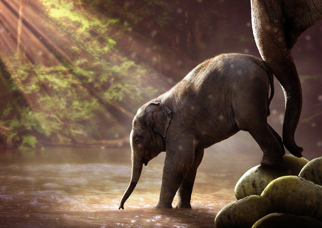 elephant-2380009_1280
